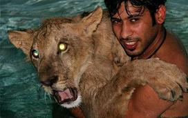 /Львы в бассейне